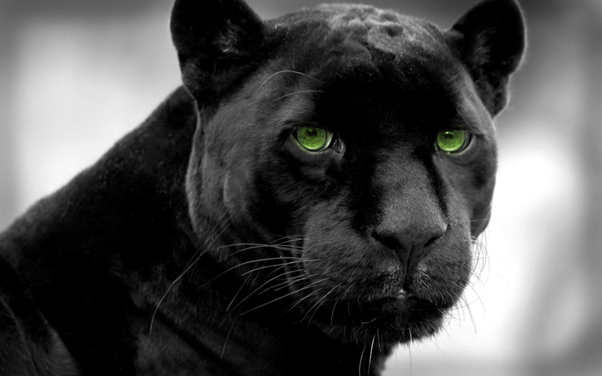 black-panther-wallpaper-3.jpg