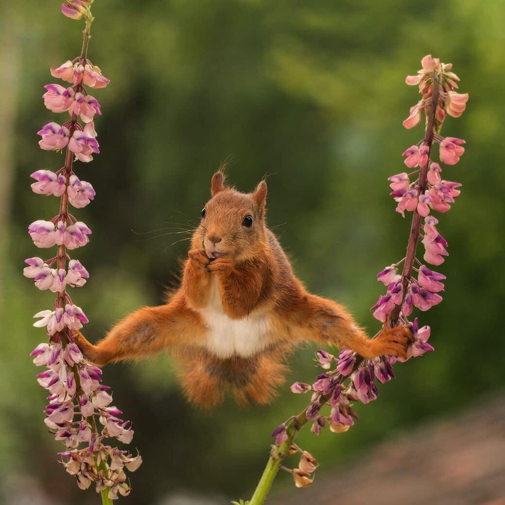 comedy-wildlife-photography-awards-mid-way-entries-4.jpeg