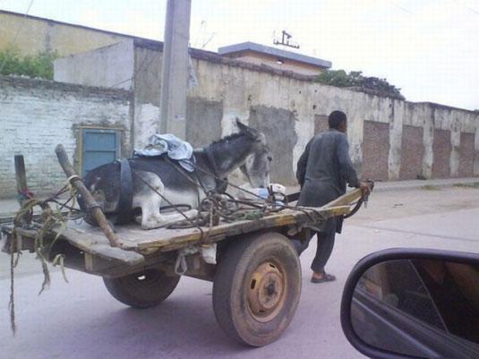 a.aaa-Tired-donkey..jpg