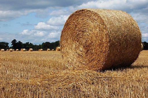 bales-of-hay-4380307__340.jpg