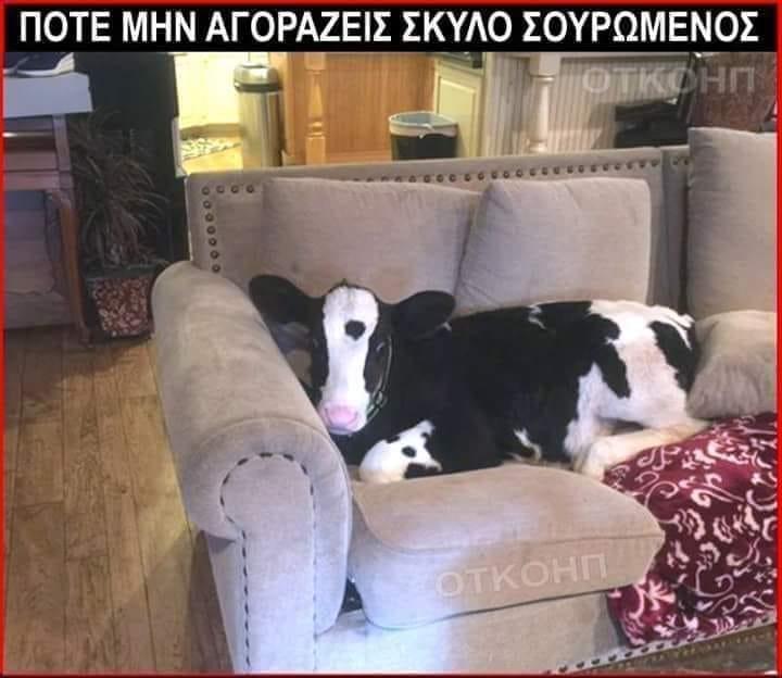 σκυλομπε.jpg