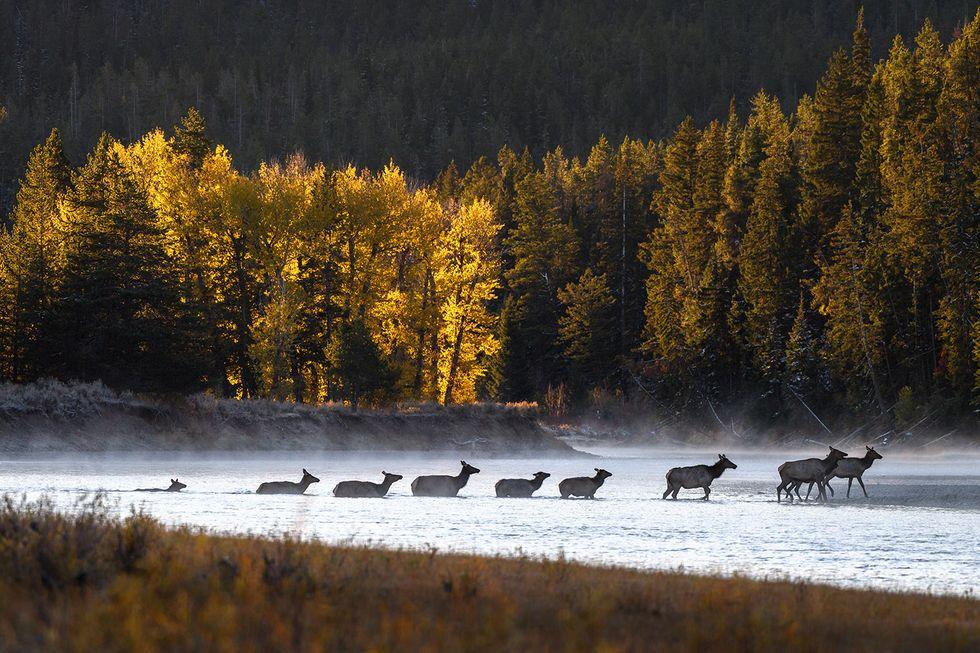 elk-fall-season-1537989602.jpg