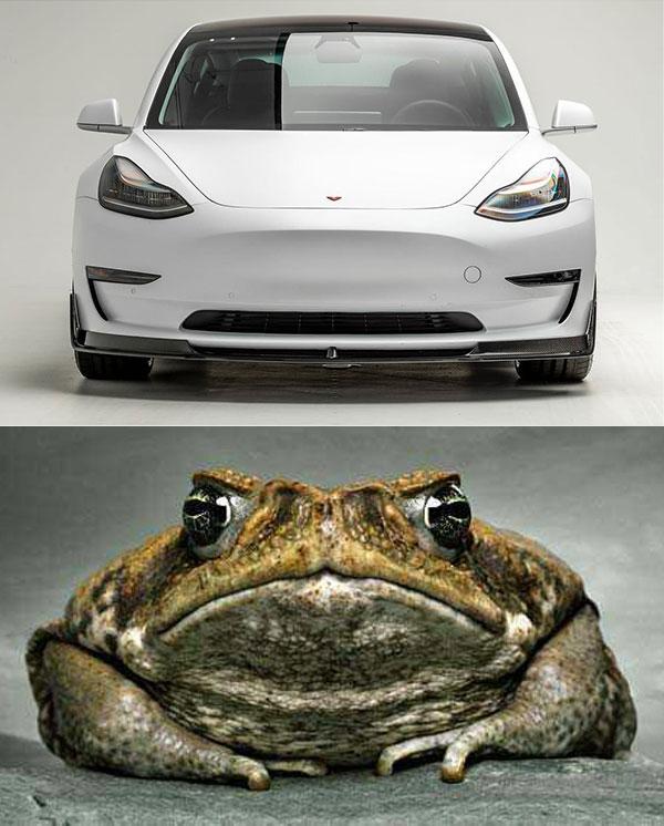 tesla_vs_toad.jpg