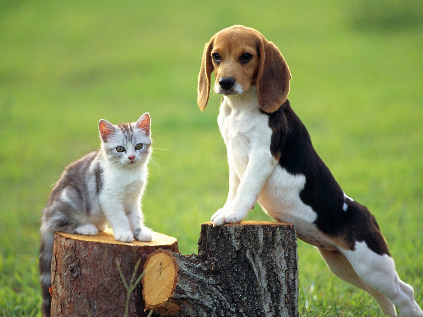 cats-and-dogs-friends-forever-wallpaper (2).jpg