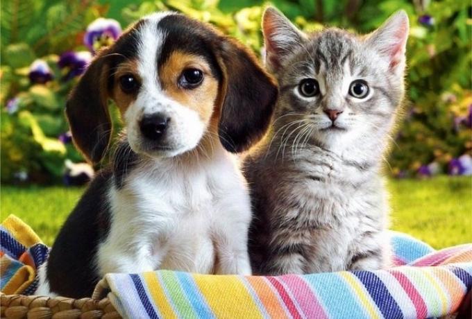 cat_and_dog07.jpg